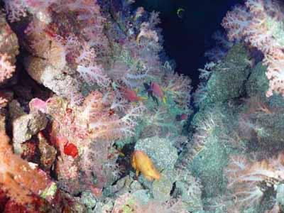 Abundant life is found on the summit of a seamount near Guam, NOAA